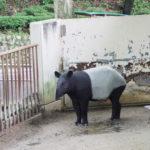 動物園のすみっこでバクの名前を叫ぶ。
