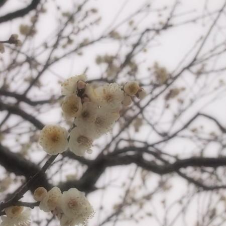 saori_140220-06