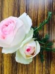 薔薇園 びび
